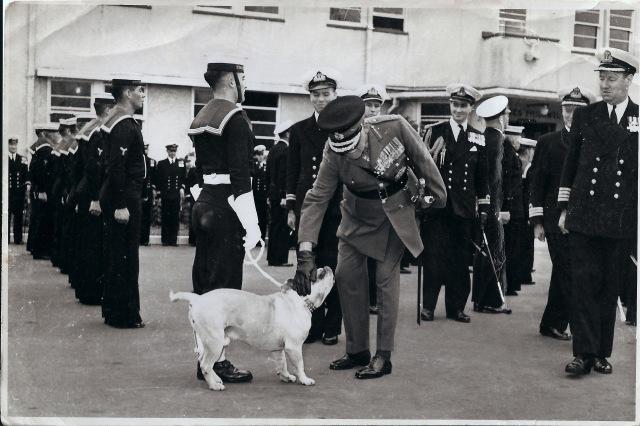 Navy Mascot_Dog Reviewed