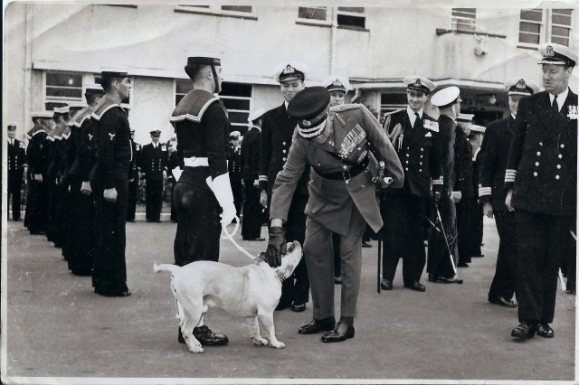 Navy Mascot_Dog Reviewed